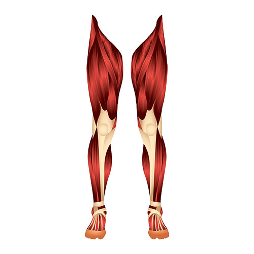 Spieren in benen